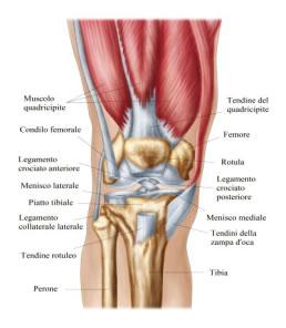 Lesioni meniscali e artrosi del ginocchio: quando è necessario operare