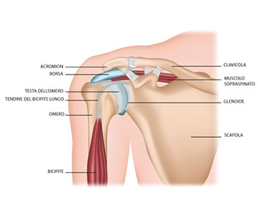 La spalla dolorosa: patologia e trattamento